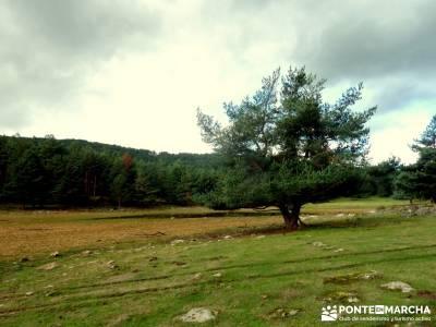 Parque Natural Sierra de Cebollera (Los Cameros) - Acebal Garagüeta;club montaña madrid gente jove